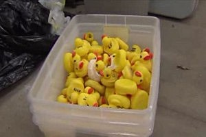 2,500 Rubber Duckies Stolen in Illinois [VIDEO]