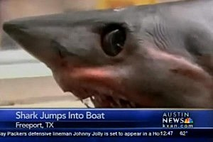 375-Pound Shark Jumps Into Fisherman's Boat [VIDEO]