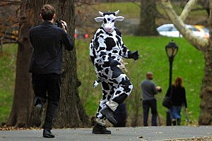 Man Wearing Cow Costume Steals Milk From Walmart