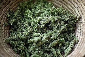 After Fourth Marijuana Arrest, Man Gets Life in Prison